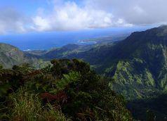 Kilohana_Lookout_Alakai_Swamp_Trail_Kauai_Hiking