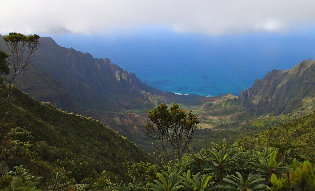Kalalau_Lookout_along_Alakai_Swamp_Trail_Kauai_Hiking