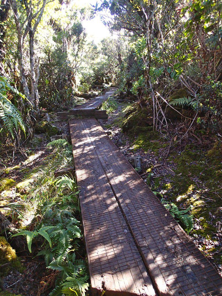 Stairs_and_Boardwalk_Along_Alakai_Swamp_Trail_Kauai_Hiking
