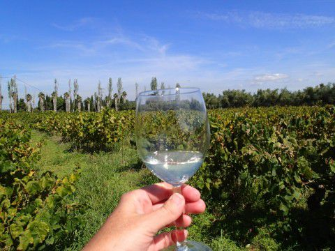 Foloi_Dry_White_Wine_from_Mercouri_Estate_Winery_Katakolon_Greece