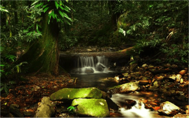 Daintree_Rainforest_Australia