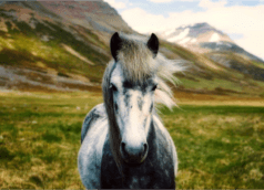 Oklahoma_horse_image