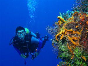 Scuba Diving Adventure in Bali