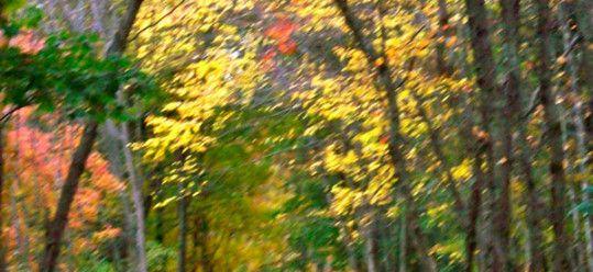 Bike Trail from Chelmford to Lowell, Massachusetts