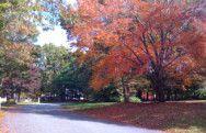 Neighborhood Fall Colors Massachusetts