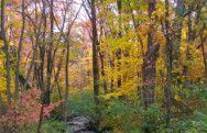 Autumn Landscape Massachusetts