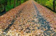 Bruce Freeman Trail Chelmsford, Ma