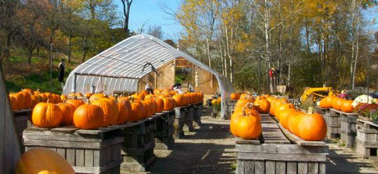 Fall Pumpkins at Drews