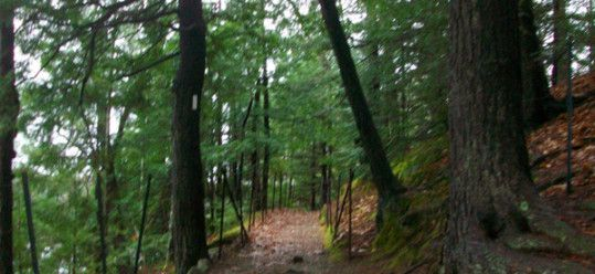 Paths around Walden Pond