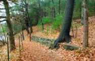 Walden Pond Trails