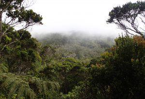 Alakai_Swamp_Vista_of_Swamp_Kauai_Hiking