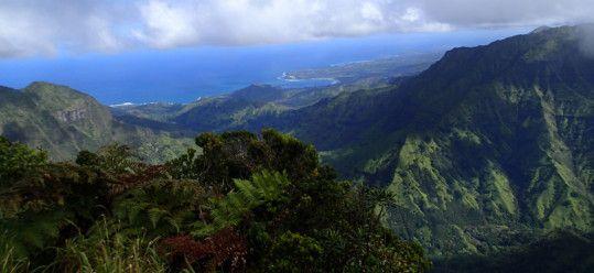 Hiking Kauai Alakai Swamp Trail