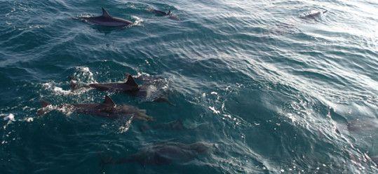 Dolphins Fooling Around the Napali Coast – Kauai Adventure Travel