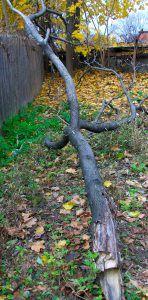 Evil_Tree_in_Poughkeepsie_New_York_2009