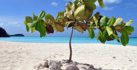 Beyond the Beach Holiday Basics Antigua and Barbuda