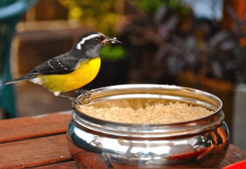 Antigua_and_Barbuda_Travel_Birds
