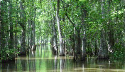 Louisiana: A Summer Adventure